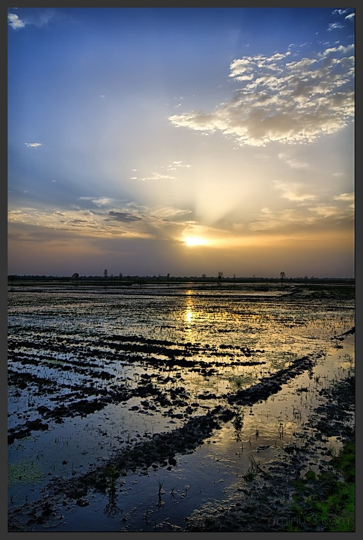 Watching the sunrise at paddy field.
