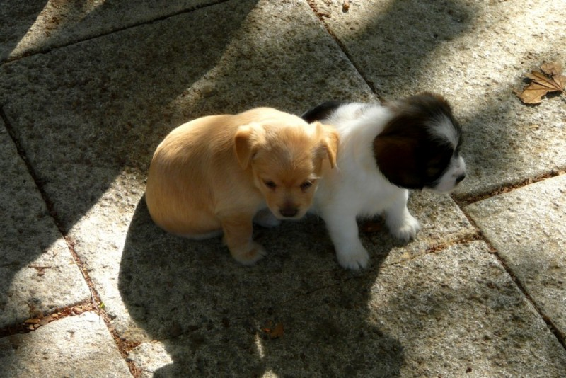 A couple of puppies in the street