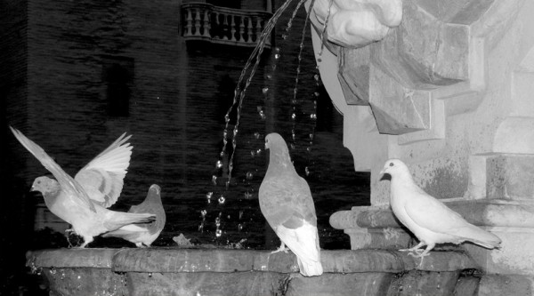 Some pidgeons drinking in a fountain