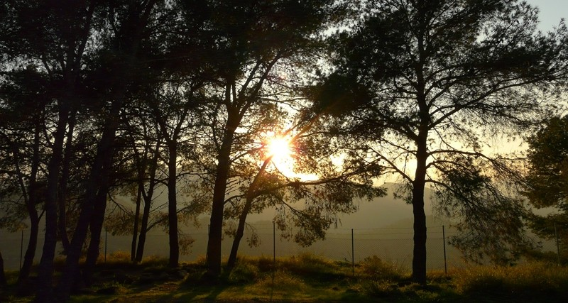 light through a trees