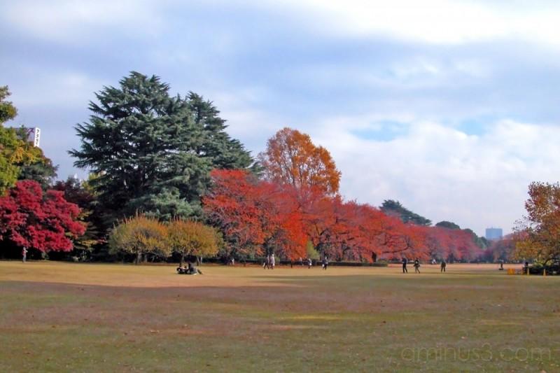 December colours in the English Garden, Shinjuku