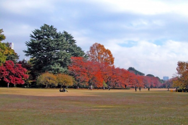 December colours in the English Garden, Shinjuku