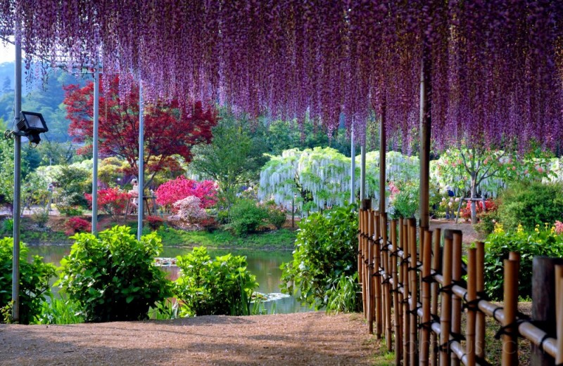 View from Ashikaga Flower Garden in May,Japan
