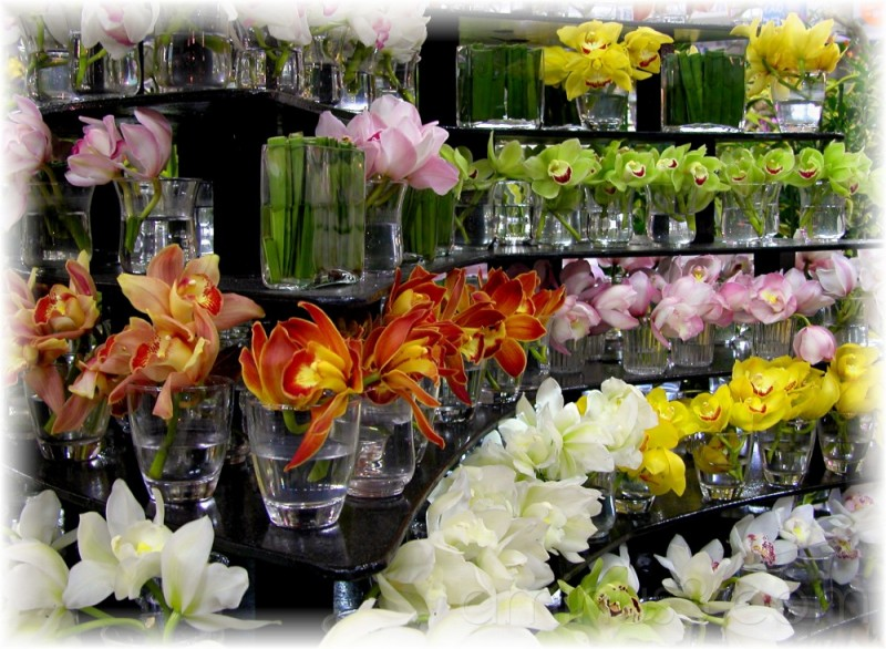 Orchids display at Tokyo Dome 2007