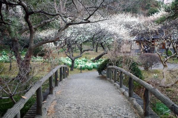 Plum Garden at Sankeien,Yokohama