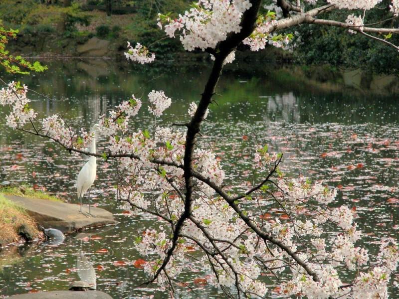 View of the pond at Shinjuku Gardens,Tokyo