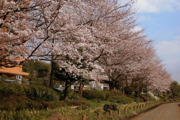 Spring in suburban Japan
