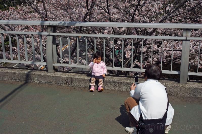 Posing with the sakura in bloom,Wabkabadai