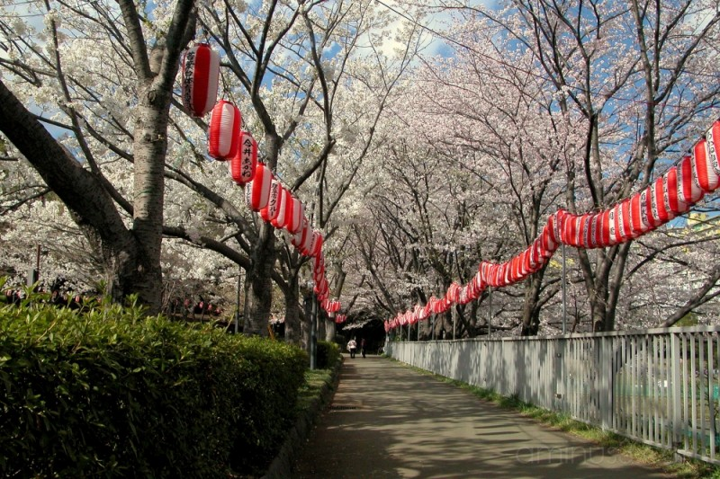 Along the alley with red lanterns,Wakabadai