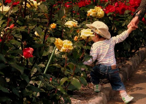 In the rose garden at Ofuna Flower Center