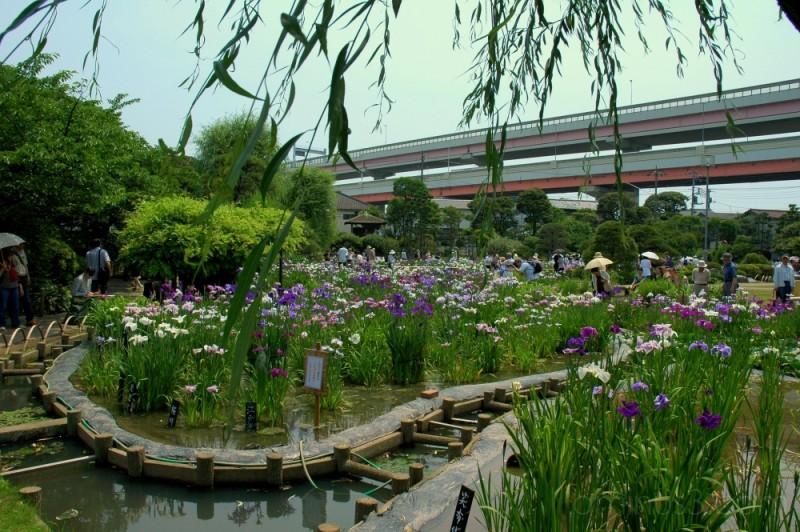 View of the iris garden at Horikiri,Tokyo