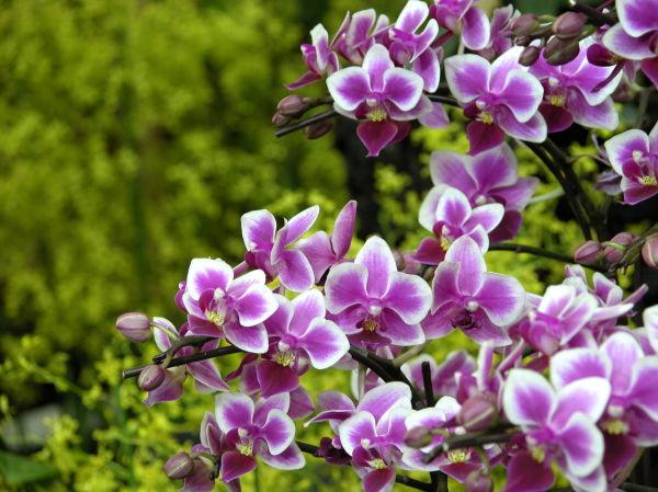 A bouquet of orchids
