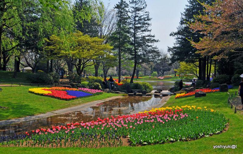 Flower Festival at Showa Memorial Park,Tachikawa