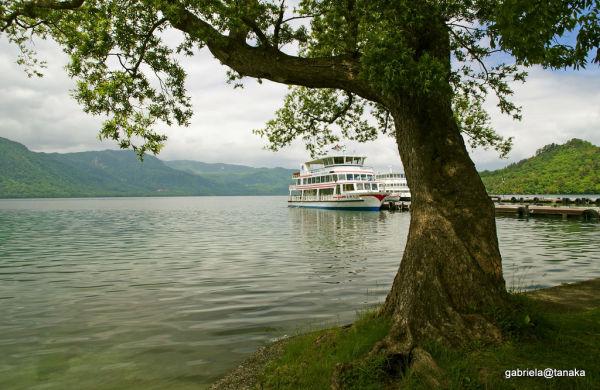 Tree on the lake shore, Towada, Tohoku,Japan