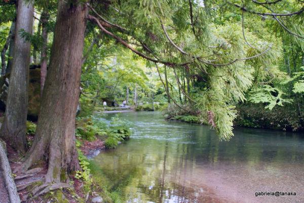 Along the Oirase river,Towada-Hachimantai Nat.Park