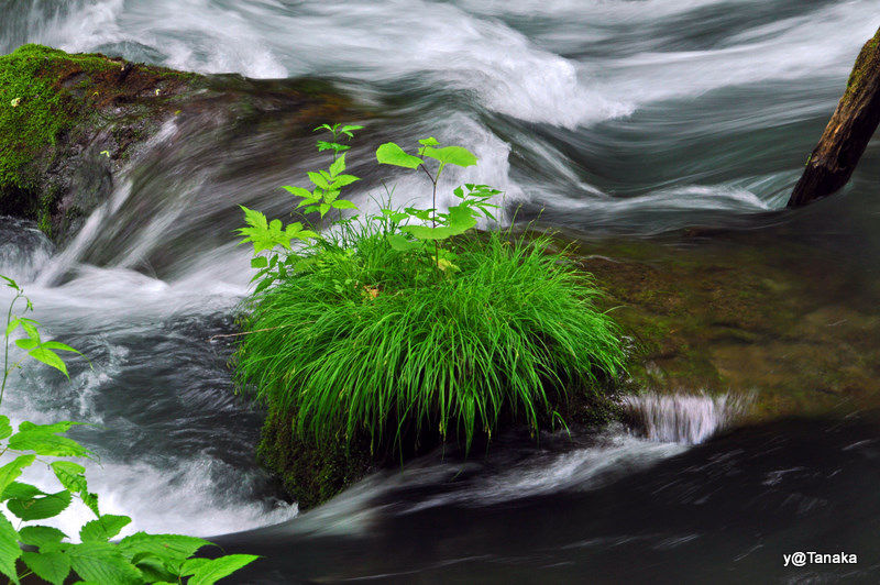 Small island in the river,Oirase gorges,Tohoku