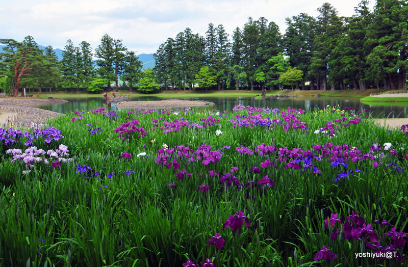 The Pure Land Garden at Motsuji,Hiraizumi