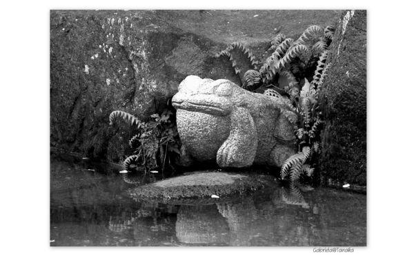 La Fontaine's Frog