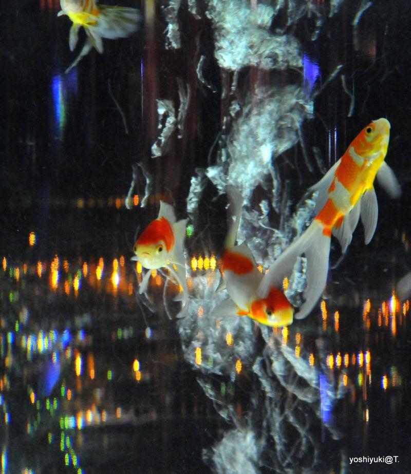Curious fish in the acquarium, Sky Garden