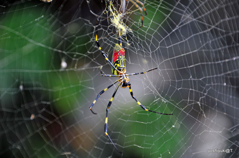 Spider in autumn