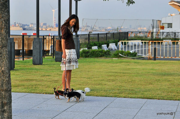 Dog life at Yokohama