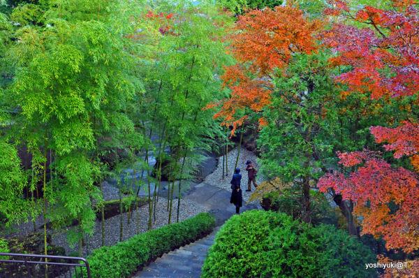 Chinese-style garden,Hakone Museum of Art,Gora