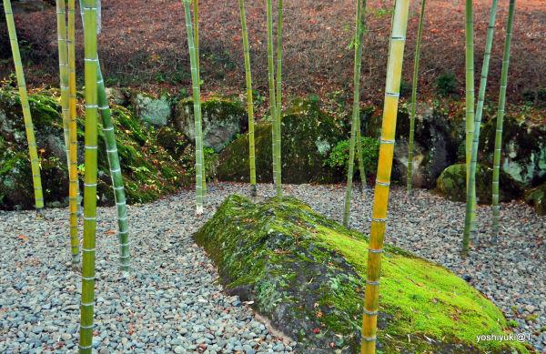 From the Chinese garden,Gora,Hakone
