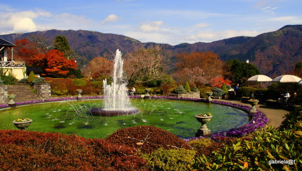Gora Park in autumn colours,Hakone