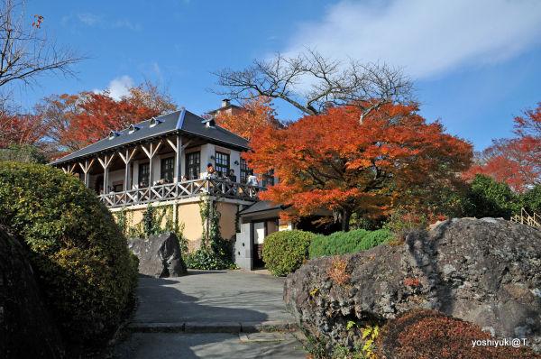 Below the Tea Room PIC in Gora Park,Hakone