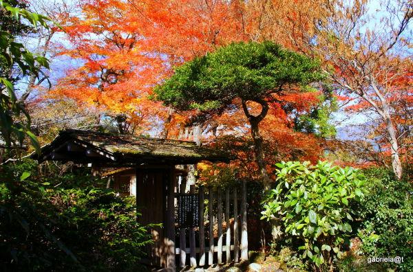 Haku-un-do Garden inside Gora Park,Hakone