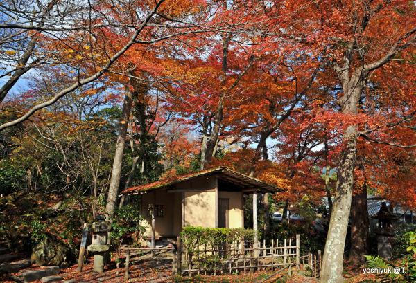 Classical tea room in Japanese garden,Gora