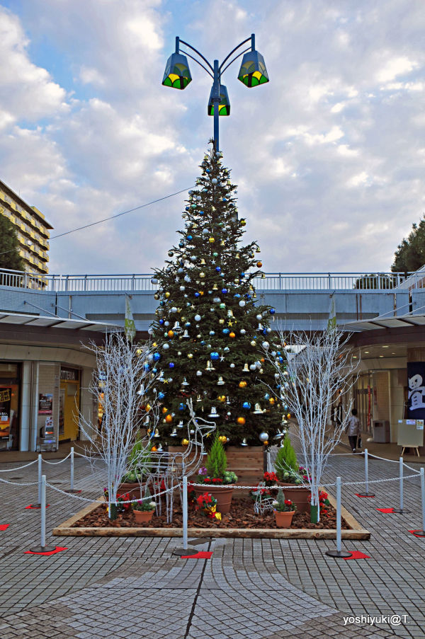 Christmas tree in our community