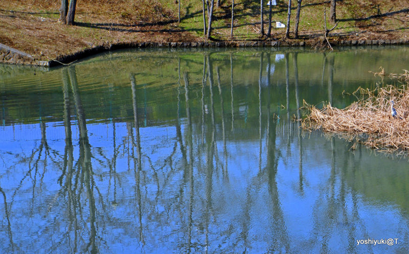 A heron by the pond in February,Kanagawa