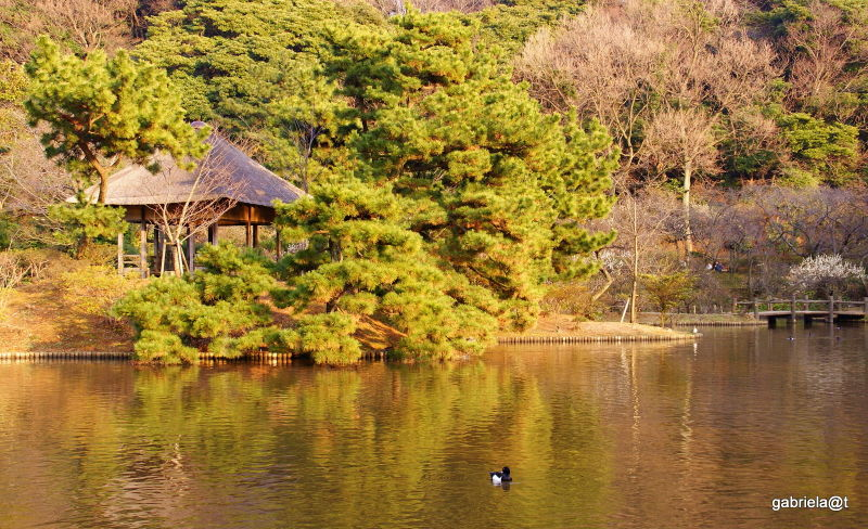Pond at Sankeien in the afternoon,Yokohama