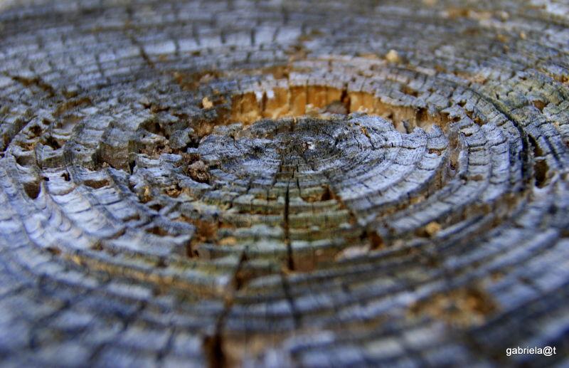 A tree stump turned artistic