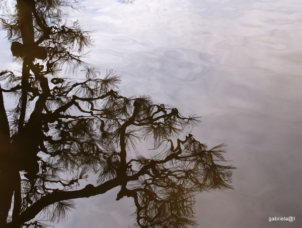 Decorative pine branch reflection