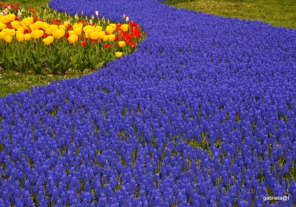 View of a flower landscape at Showa Park,Tokyo