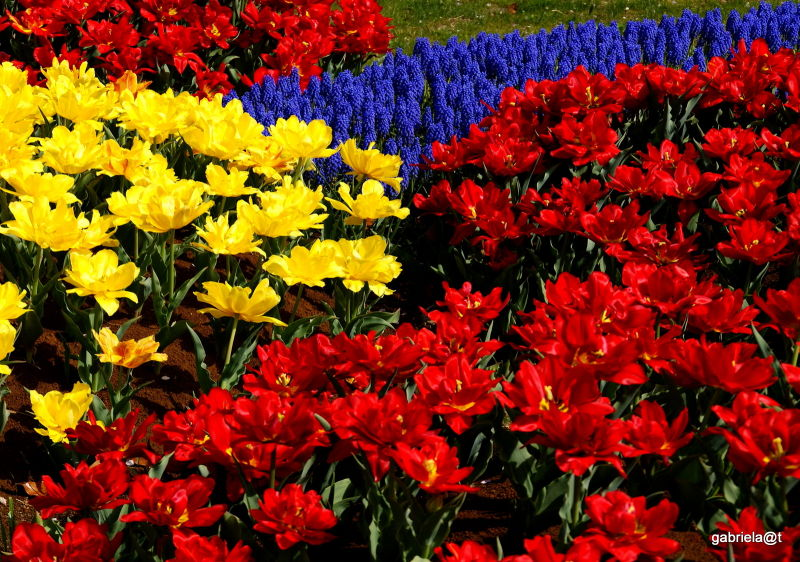 Landscaping with tulips