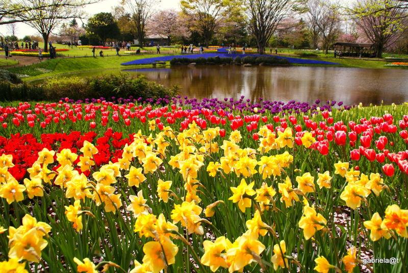 Showa Memorial Park,Tachikawa,Tokyo