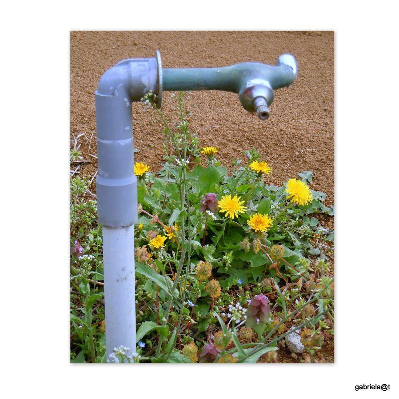 Source of water in the fields, Wakabadai,Kanagawa