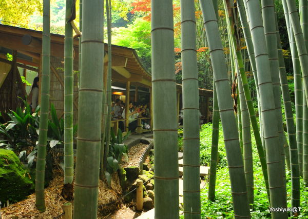 Teahouse behind the bamboo grove at Hokoku-ji