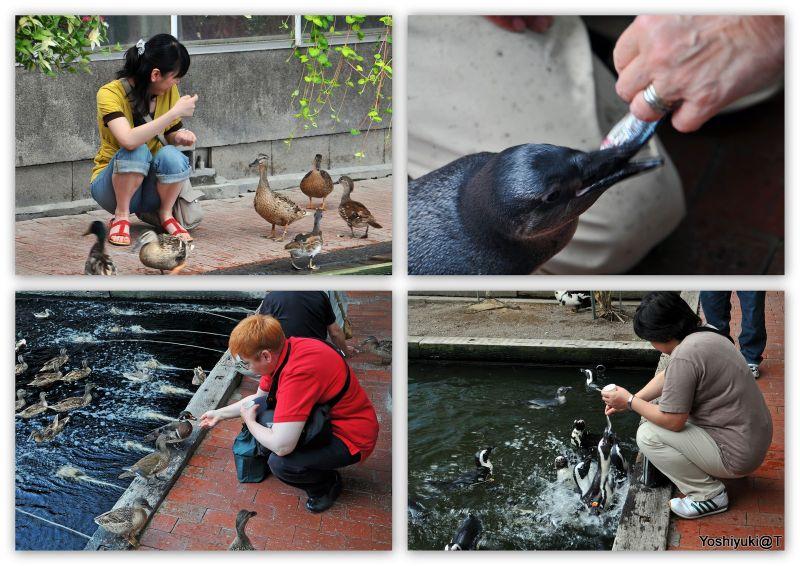 Feeding the birds at Kakegawa Kachoen,Shizuoka