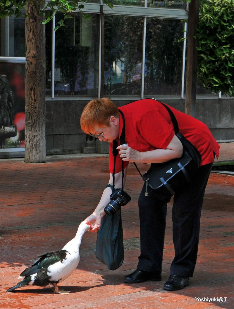 Feeding a bird at Kachoen,Kakegawa,Shizuoka