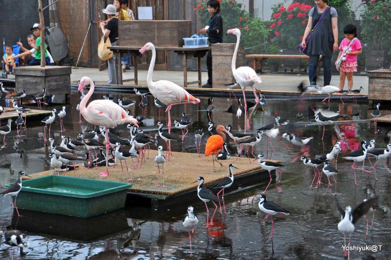 Waterfowl contact zone,Kakegawa Kachoen,Shizuoka