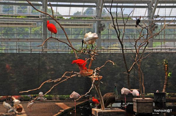 Aviary at Kakegawa Kachoen,Shizuoka