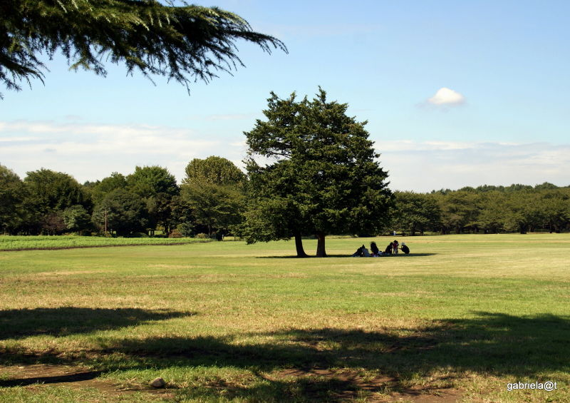 In the shade, under the tree,Showa Memorial Park
