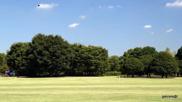 Man running a kite, Showa Park,Tokyo