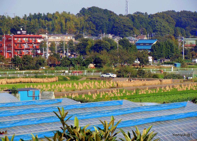 Town,rice paddies and veggie gardens,Kanagawa