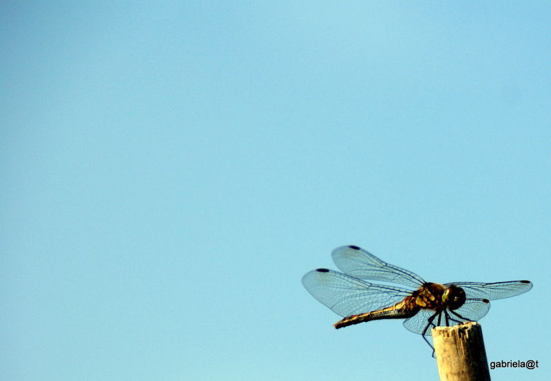 The dragonfly taking in the sunlight warmth