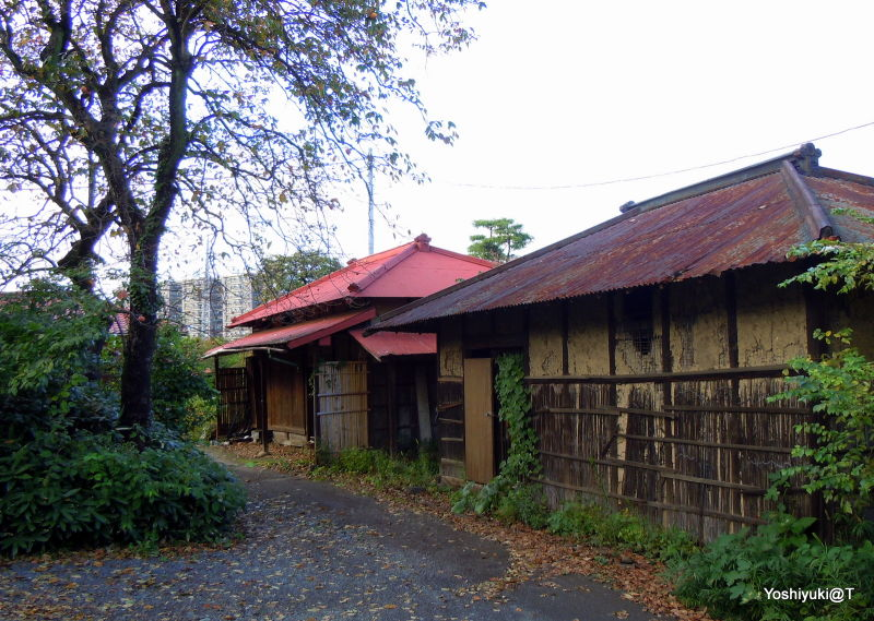 Storehouses in autumnal colours,Kanagawa